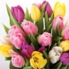 boquet of pink, yellow and white tulips