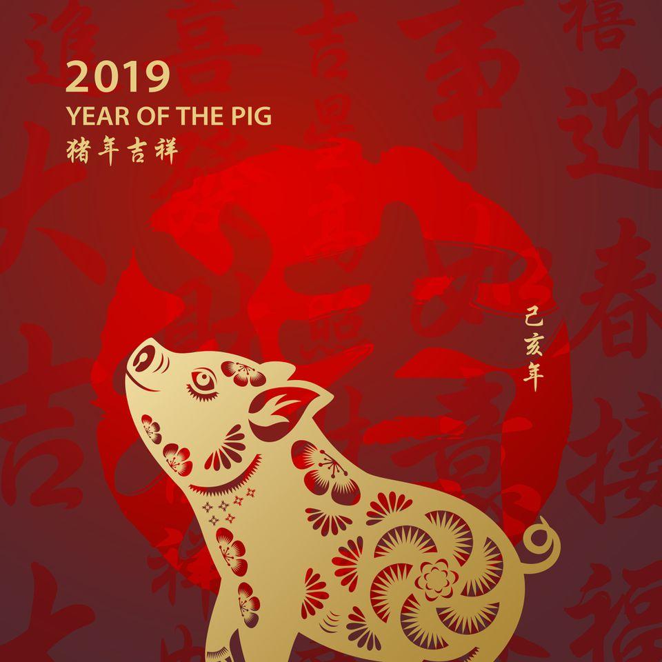 pig and calendar