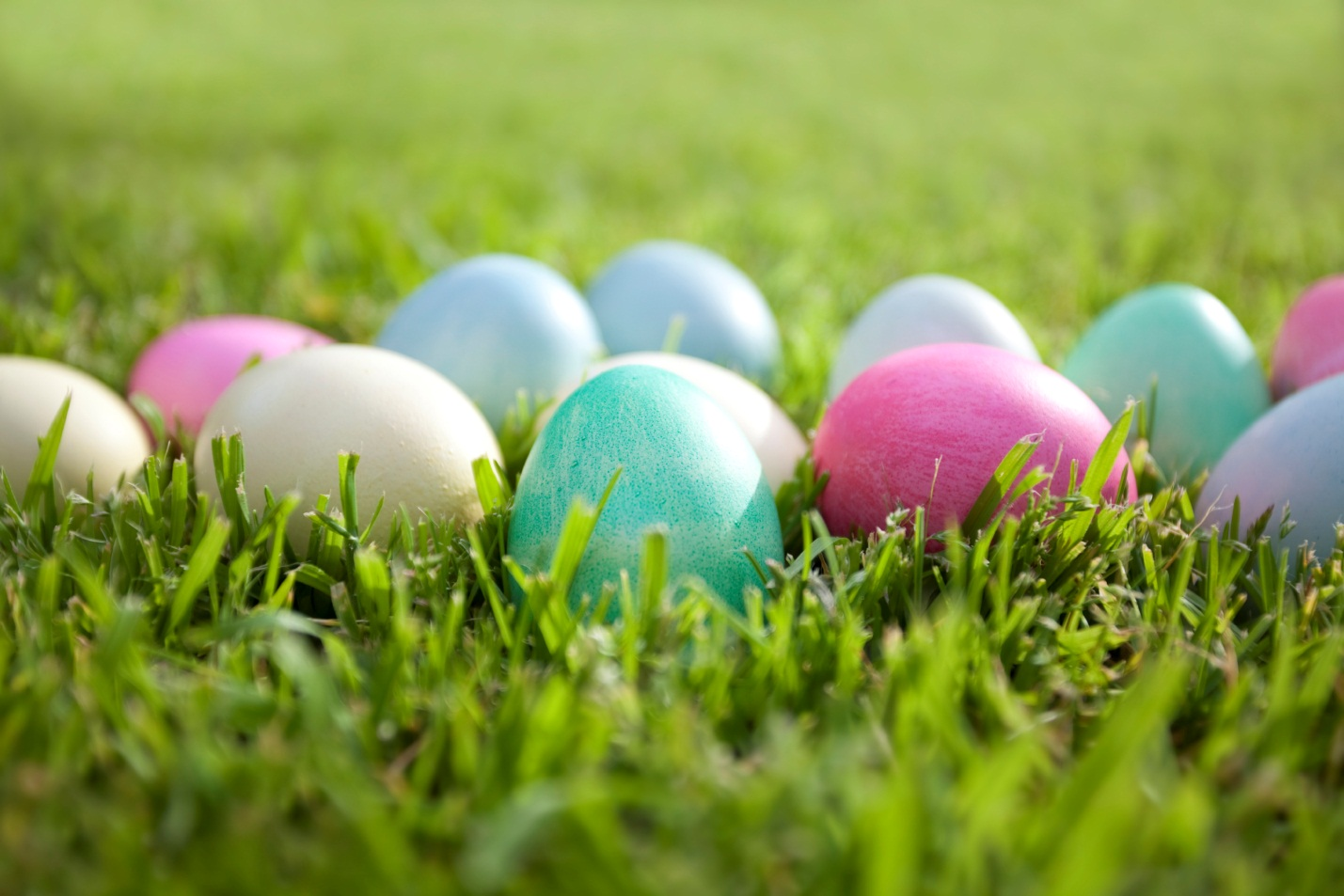 Coloured eggs on grass