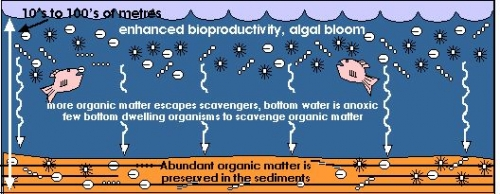 auses or conditions which can result in the enhanced burial and preservation of organic matter in marine sedimentary rocks