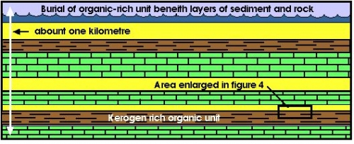 burial of the organic-rich sediment under more layers of sediment