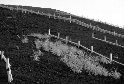 Wind-break fences and revegetation