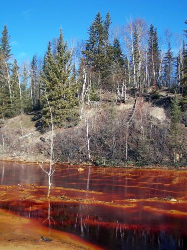 Shoreline of a pond receiving AMD