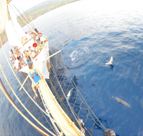 Dolphins greeting ship crew.