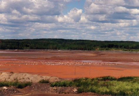 The same tailings impountment as Figure A (above) after 7 years of sulfide oxidation