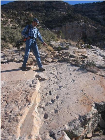 Tetrapod tracks in the Coconino Sandstone.