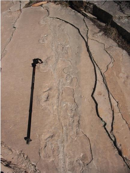 Tetrapod tracks in the Coconino Sandstone closer.