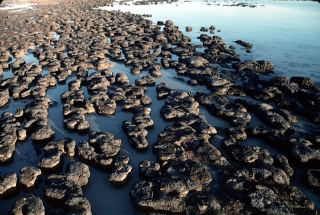 Modern stromatolites