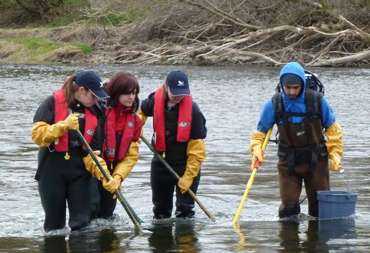 Electrofishing in Grand River