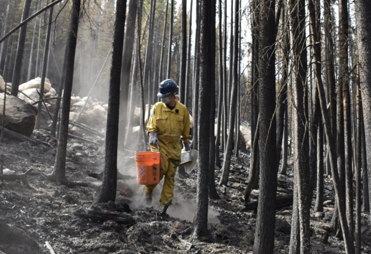 person walking through a post-wildfire forest carrying a bucket