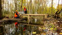 Researchers in a swamp.