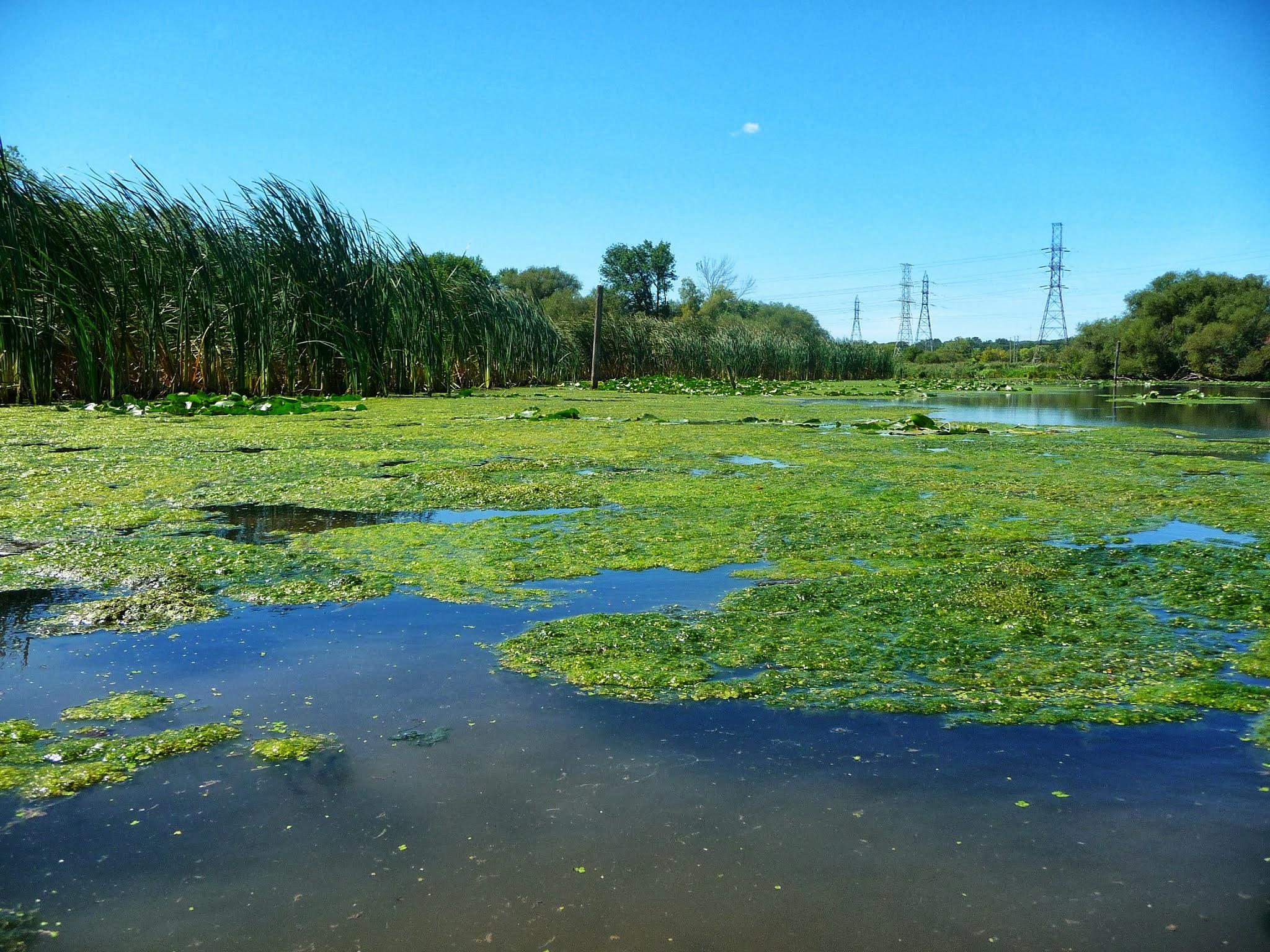lake with algae on it
