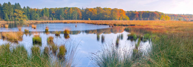 Marsh image