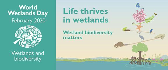 Wetlands Listing image