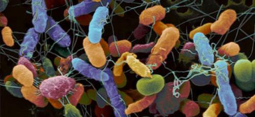Soil microbe community