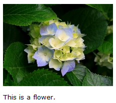 Image of flower with This is a flower text below it.