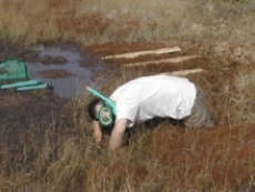 A student wearing a mask and snorkelling lying in a peatland.