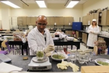 Researchers prepare plant samples for an incubation study in the lab.