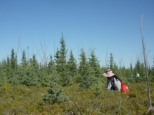 A researcher in a treed bog.