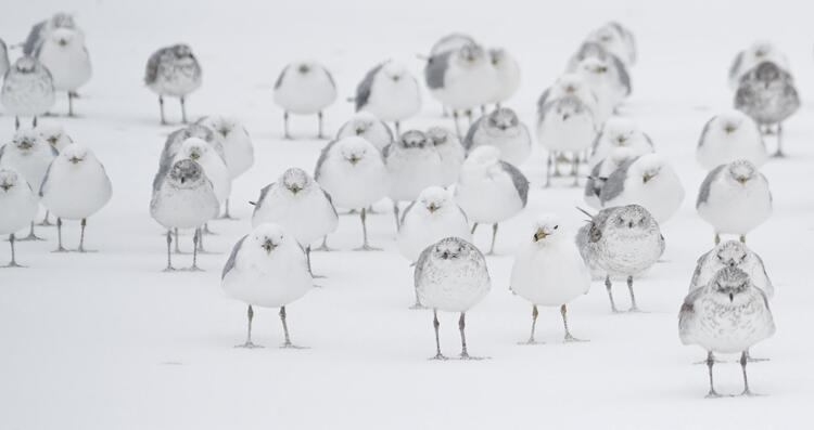 Group of birds in snow