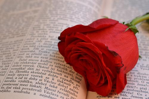 Red rose placed on the text of a book