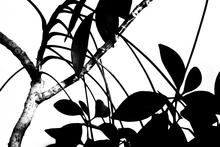 black and white tree branch with leaves