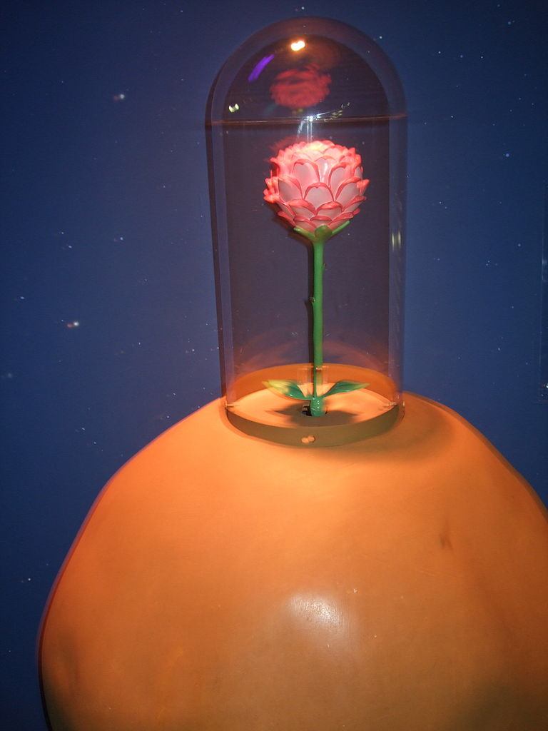 blog writing and communication centre rose inside of a glass case