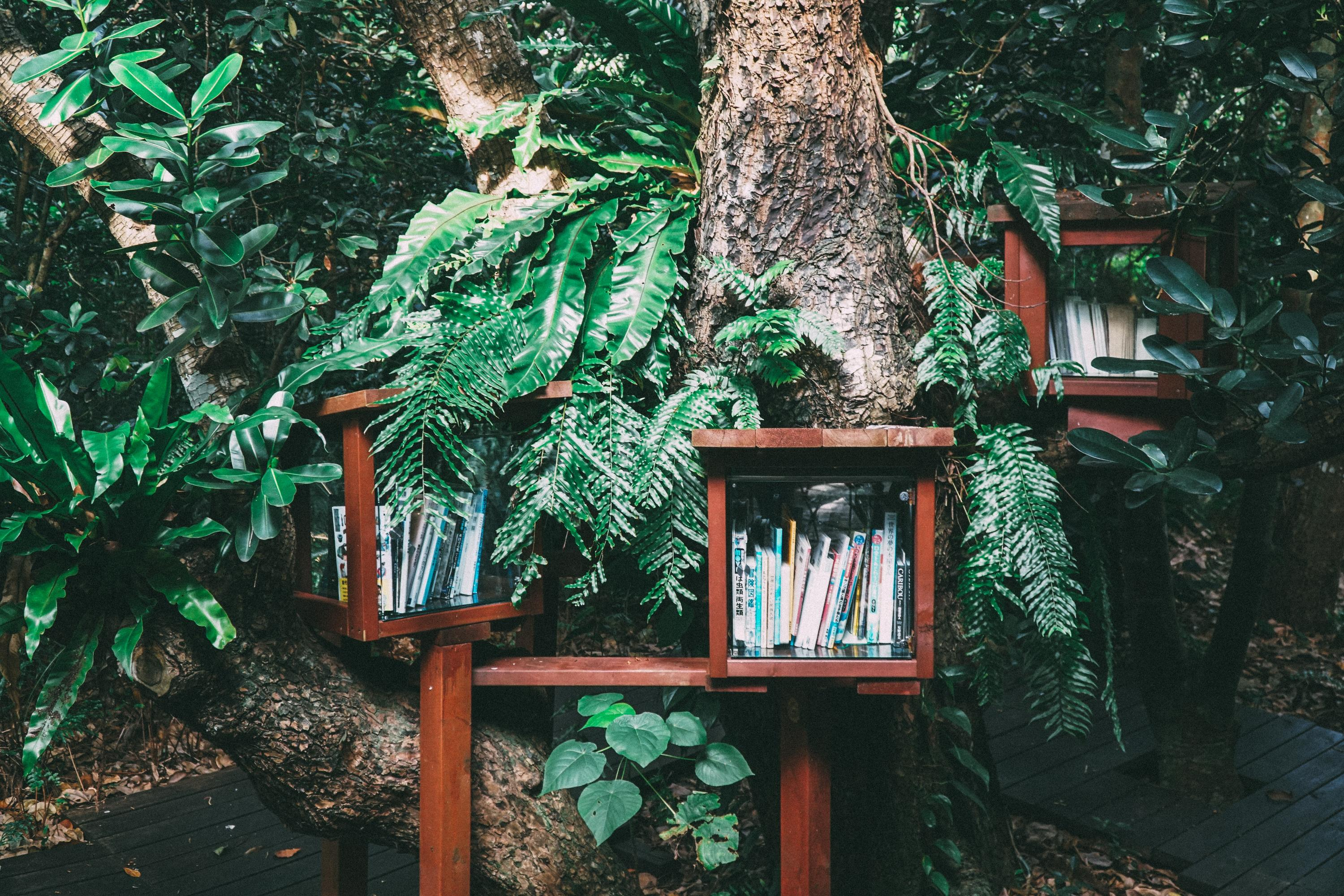 book shelf on a wall surrounded by plants
